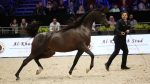 Idel By Mial - in foal to World Champion Wadee Al Shaqab